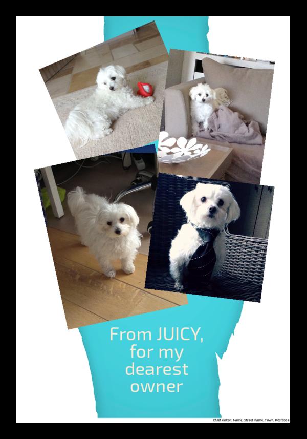 make a newspaper newspaper template pets - happiedays